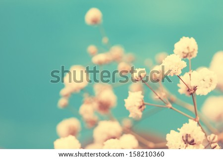 vintage adorable small white flower buds - stock photo