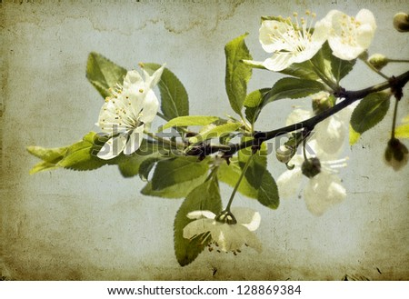 Vintage background of spring blossom - stock photo