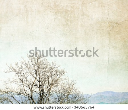 Vintage bare branches with far view of mountain - stock photo