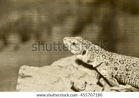 Vintage. Beautiful close up photo of a lizard. The reptile lives in Spain, Portugal, France, Italy. It prefers dry, rocky, sandy areas. Amazing Ocellated Lizard. Wildlife. Postcard. Creative artwork. - stock photo