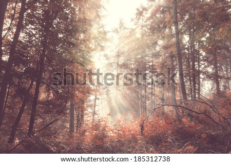 Vintage beauty autumn forest with sunrays in the morning - stock photo