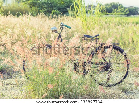 Vintage bicycle in a middle of beautiful grass flowers with a nature green field as a background in the evening time - stock photo