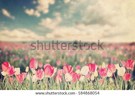 Vintage Big tulip flowers meadow, spring landscape - stock photo