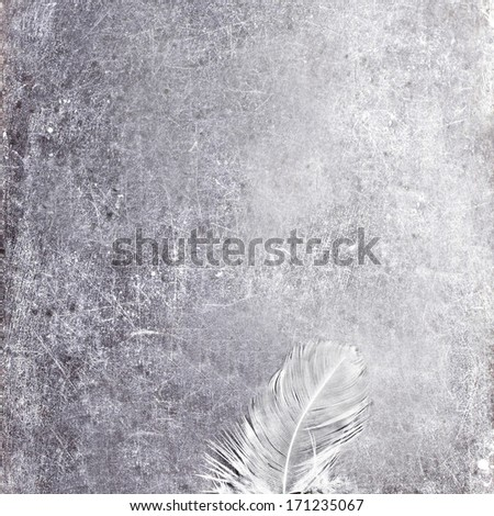 Vintage Blank gray scratched board  with white feather and copy space for text, close up.