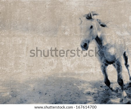 Vintage Blue Horse textured postcard with sepia background - stock photo