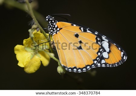 Vintage butterfly and flower in spring - stock photo