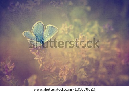 Vintage butterfly. Antique style photo of butterfly on flower with old paper texture. - stock photo