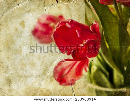 Vintage card. bouquet of red fresh spring tulip flowers over white background - stock photo