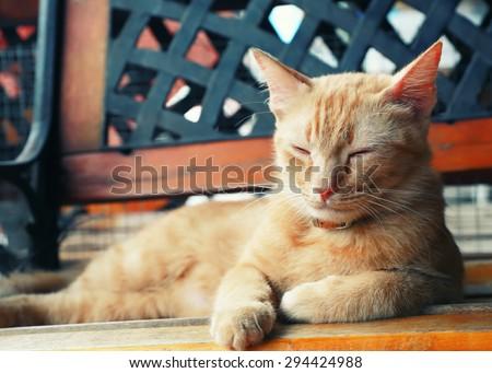Vintage cat portrait focus at eye. - stock photo