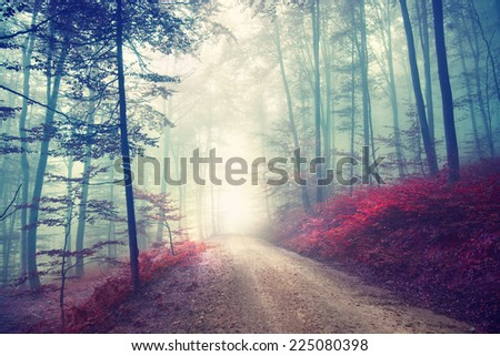 Vintage color effect autumn forest road with fantasy light. Vintage filter effect used. - stock photo
