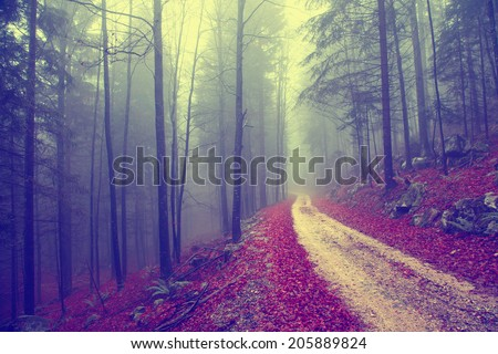Vintage color effect autumn forest with road. Vintage filter effect used. - stock photo