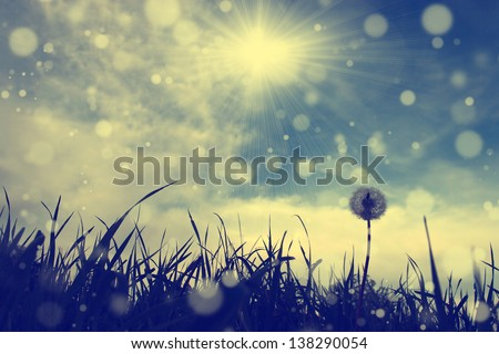 Vintage dandelion with blue sky and sun flare - stock photo