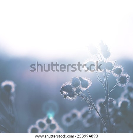 vintage dry meadow plants in field