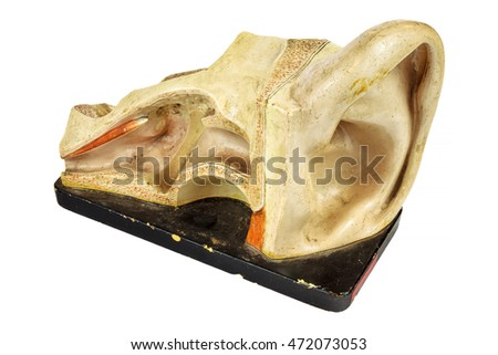 Vintage education model of a human ear isolated on a white background