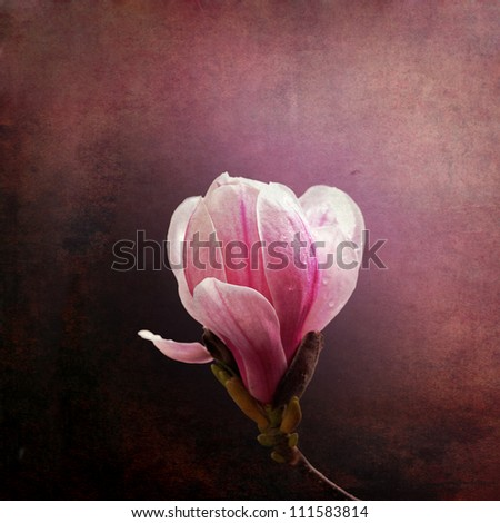 Vintage effect magnolia bloom on grunge background - stock photo