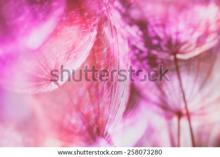 Vintage effect - Pink pastel background - Vivid color abstract dandelion flower - extreme closeup with soft focus, beautiful nature details - stock photo