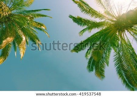 Vintage effect tropical palms against blue sky.