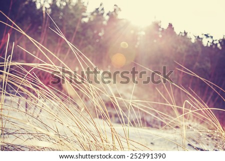 Vintage faded blurred nature background with flare effect. - stock photo