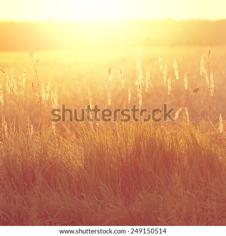 vintage field at sunrise. Nature spring vintage outdoor background - stock photo