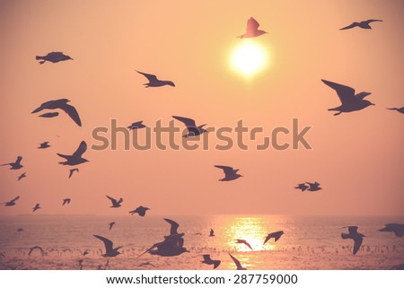 vintage filter of Motion Flying silhouette bird on the sunset