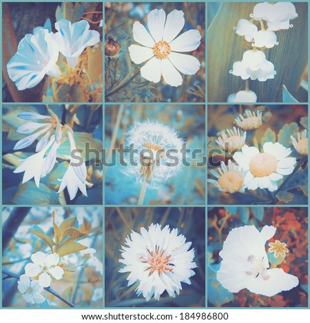 Vintage floral collage of various flowers. Art floral background with paper texture overlay. Retro style. - stock photo
