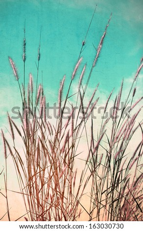 Vintage flower of the grass. - stock photo