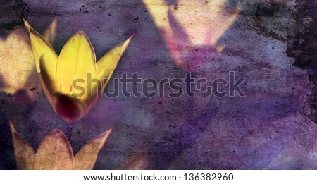 Vintage flower. Photo of beautiful  wild flower with dark grunge old paper pattern. - stock photo