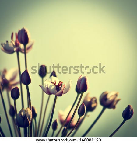 vintage flowers background - stock photo
