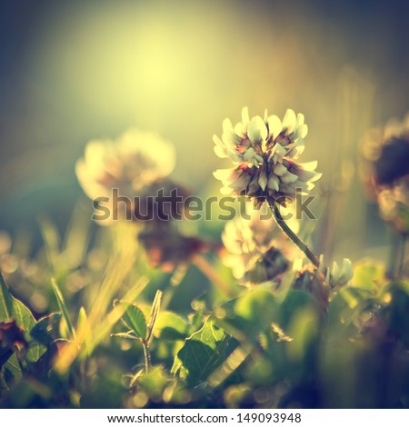 vintage flowers background - stock photo