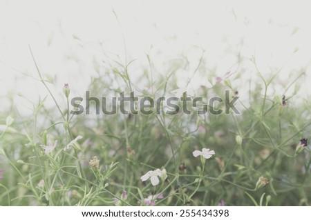 Vintage Flowers In warm tones - stock photo
