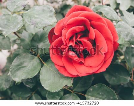 Vintage Flowers - soft focus - stock photo