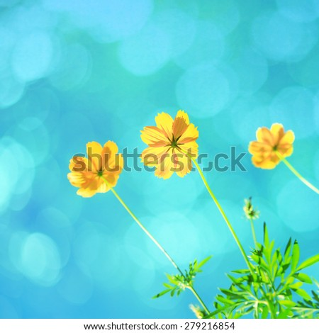 Vintage flowers. vintage color filter effect. - stock photo