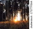 vintage forest background with sundown and sun ray - stock photo
