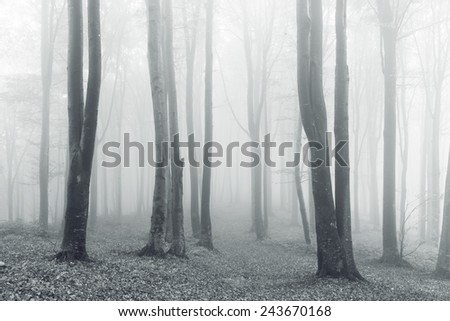 Vintage forest into a foggy day - stock photo