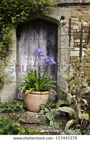 vintage garden wooden door with a terracotta plant