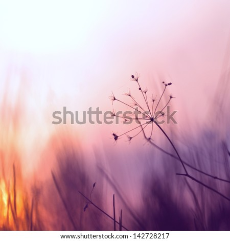 vintage grass plant on summer morning sunrise