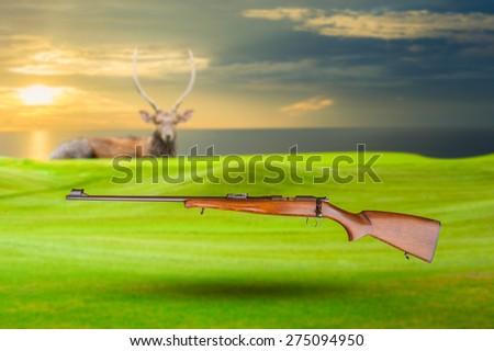 Vintage gun and Chital deer , Spotted deer , Axis deer - stock photo