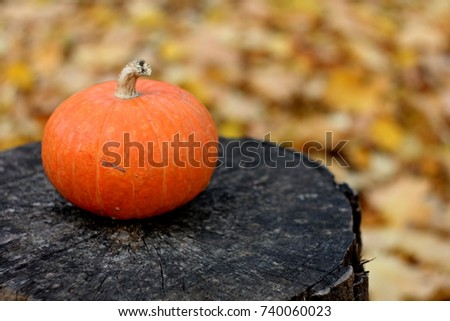 Vintage harvest picture: cute orange pumpkin close up on black wooden background on autumn leaves texture, card for fall holidays - halloween and thanksgiving