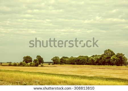 Vintage image cultivated fields of grain and rapeseed. - stock photo