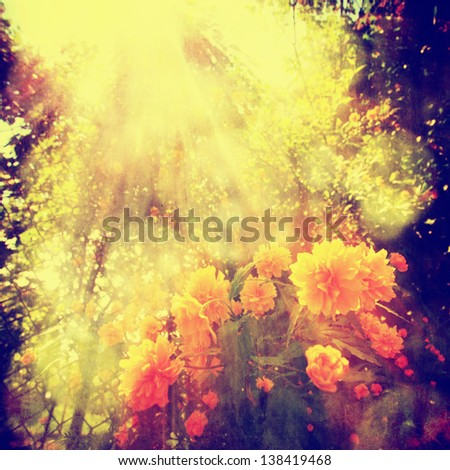 vintage ink saturated and textured garden flower with sunny rays - stock photo