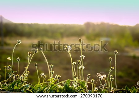 Vintage landscape of green meadow. - stock photo