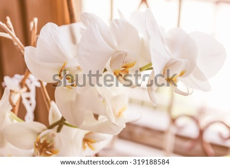 Vintage looking Detail of white Orchid (Orchidaceae) flower