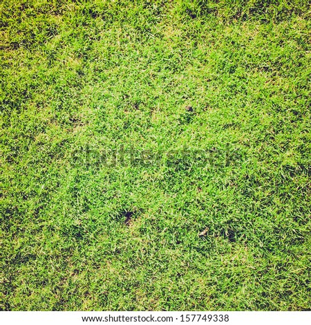 Vintage looking green grass meadow lawn background