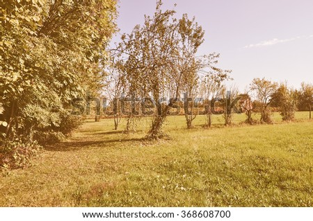 Vintage looking Natural landscape with green meadow, blue sky and trees