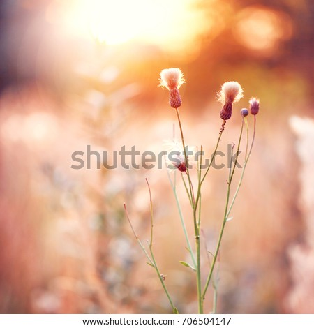 vintage meadow wild flowers at orange sunset in field. Autumn outdoor photo