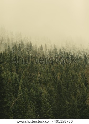 Vintage misty fir-tree tops wallpaper background. Mountain forest. Vintage effect. Travel inspiration.  - stock photo