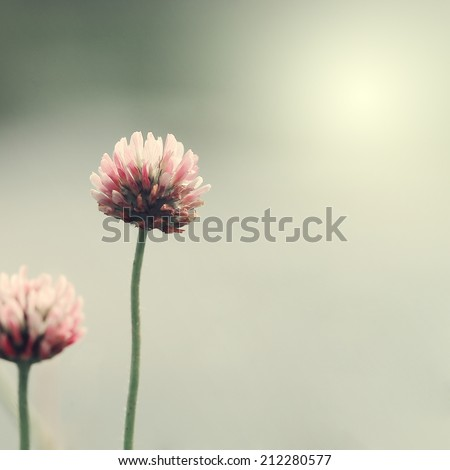 vintage nature flowers background