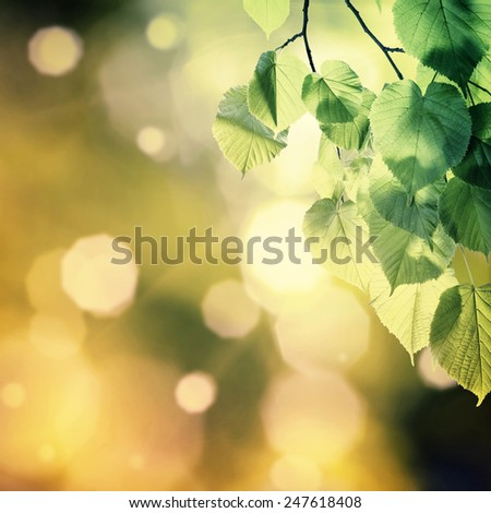 Vintage nature green background with branch - stock photo
