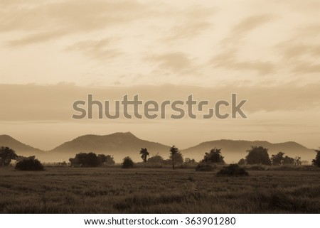 Vintage of Mountain ,sky and fog with paddy field in morning