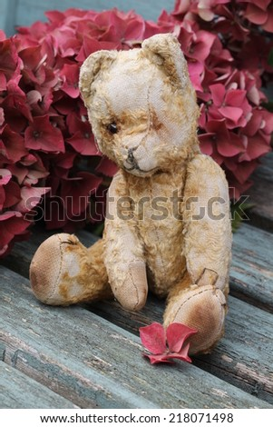 Vintage old teddy bear sat on a wooden weathered bench surrounded by autumnal pink hydrangea blooms, shabby chic, rustic image   - stock photo